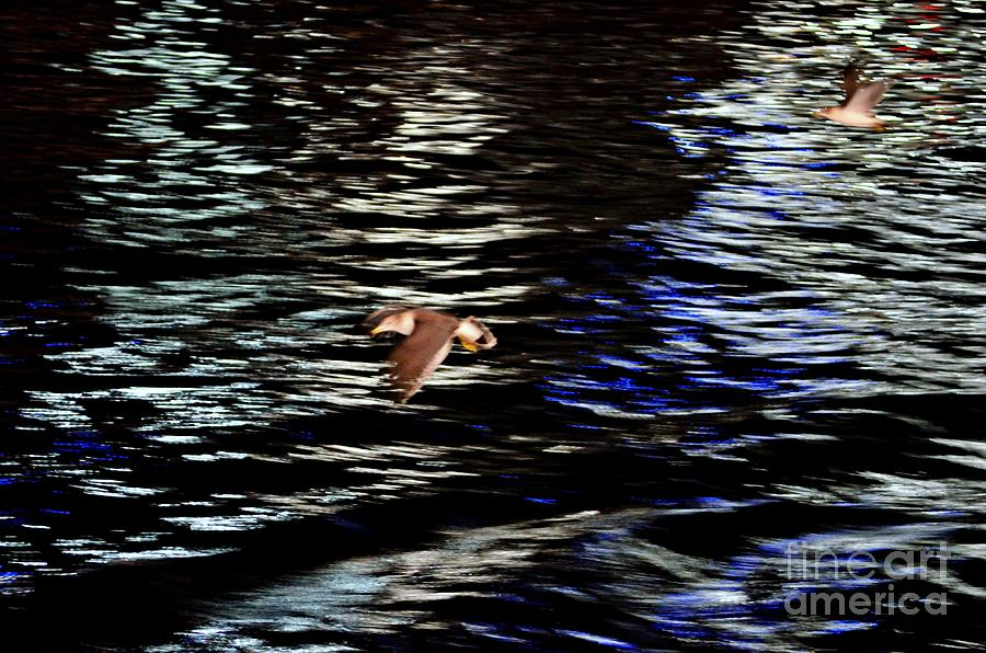 Seagulls In Flight Abstract Photograph  - Seagulls In Flight Abstract Fine Art Print