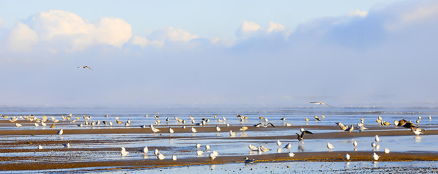 Seagulls On A Beach Photograph