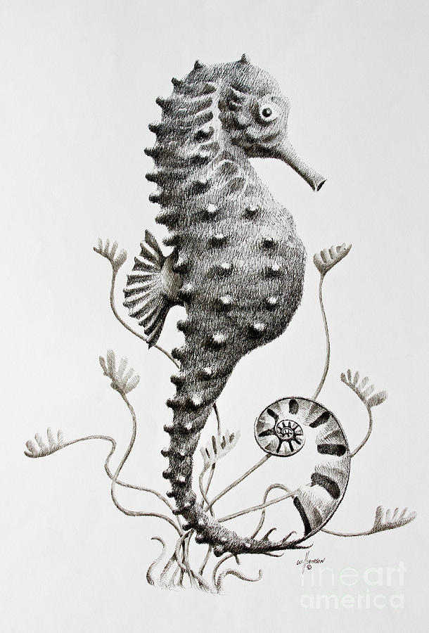 Seahorse by James Williamson