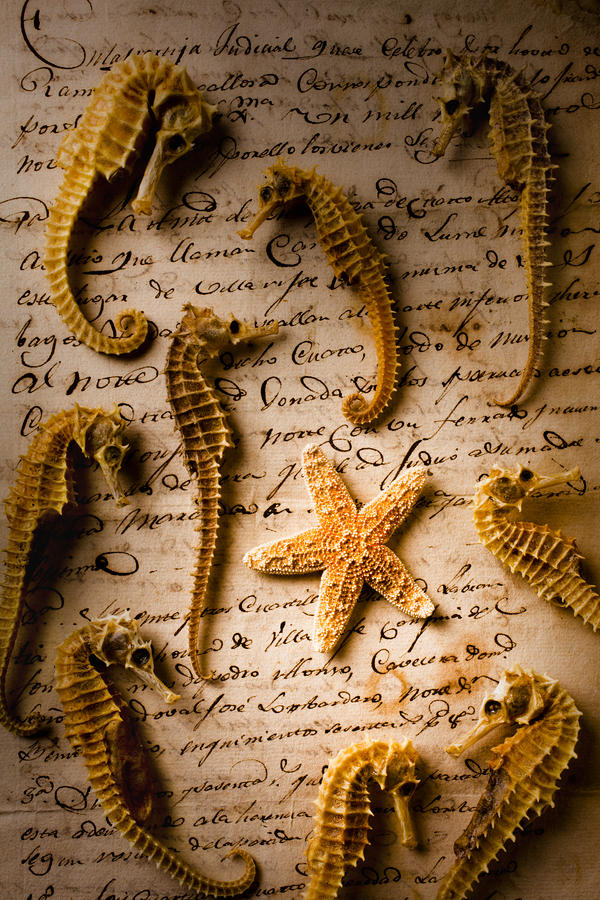 Seahorses And Starfish On Old Letter Photograph