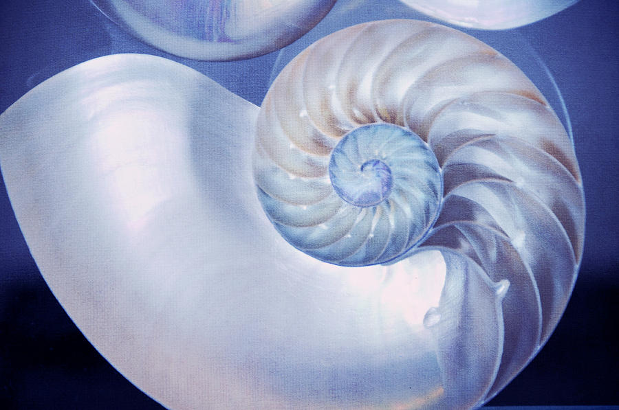 Seashell. Blue Version  Photograph  - Seashell. Blue Version  Fine Art Print