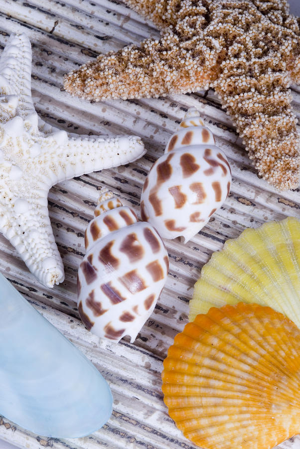 Seashells And Starfish Photograph