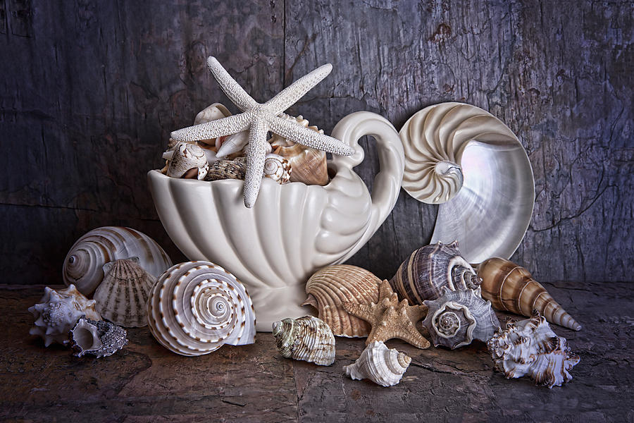 Seashells Photograph  - Seashells Fine Art Print