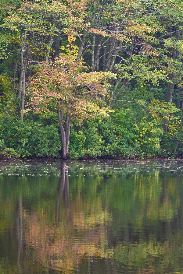 Seasons Change Photograph