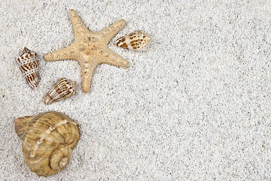 Seastar And Shells Photograph