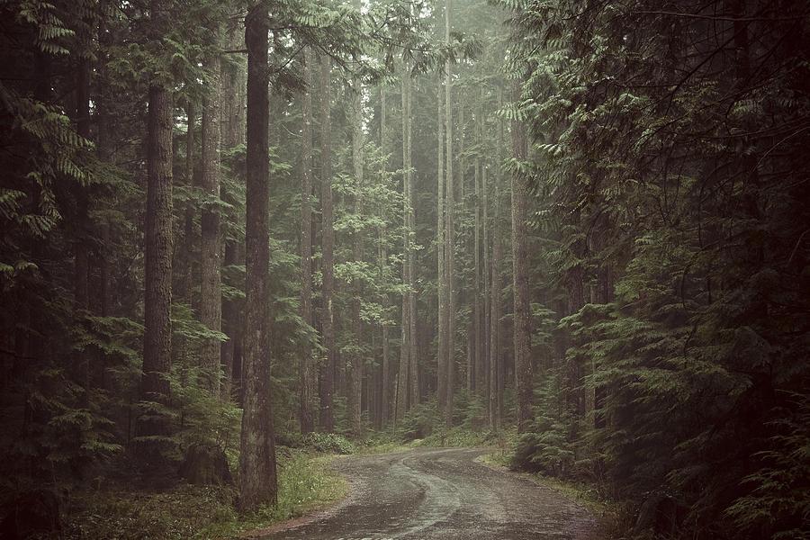 Secret Pathway Photograph