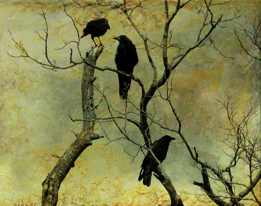 Secretive Crows Photograph  - Secretive Crows Fine Art Print
