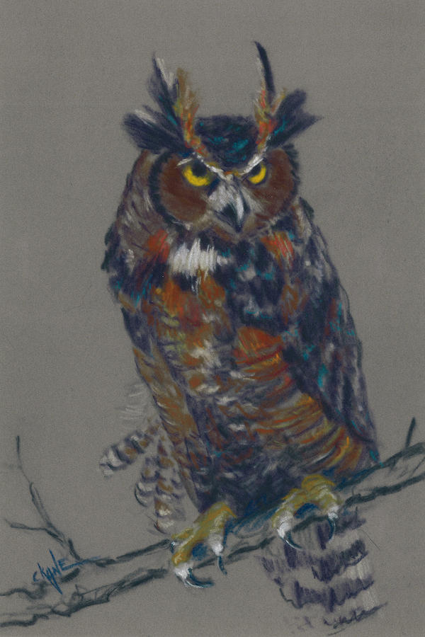 Seeking Owl  Pastel  - Seeking Owl  Fine Art Print
