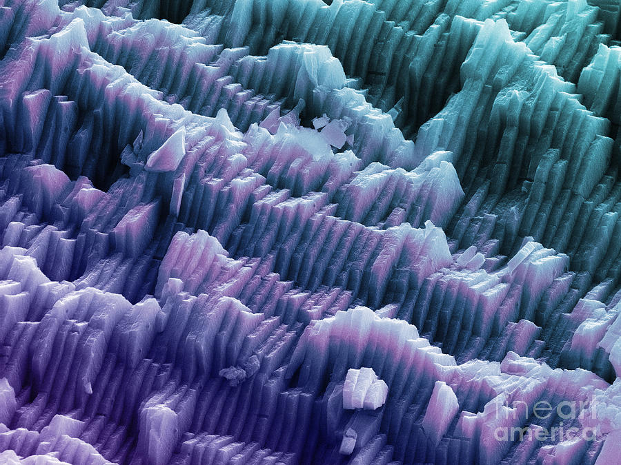 Sem Of A Blue Mussel Shell Photograph