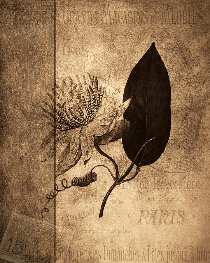 Collage Photograph - Sepia Botanical by Bonnie Bruno