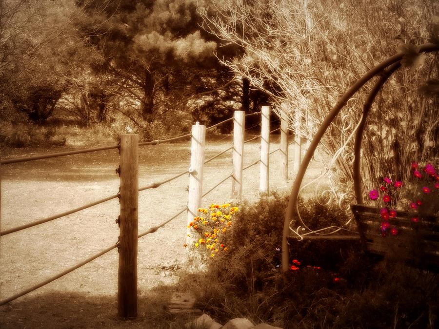 Sepia Garden Photograph