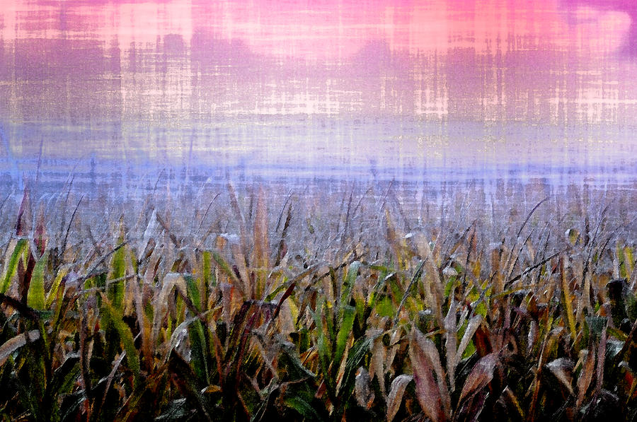 September Cornfield Photograph  - September Cornfield Fine Art Print
