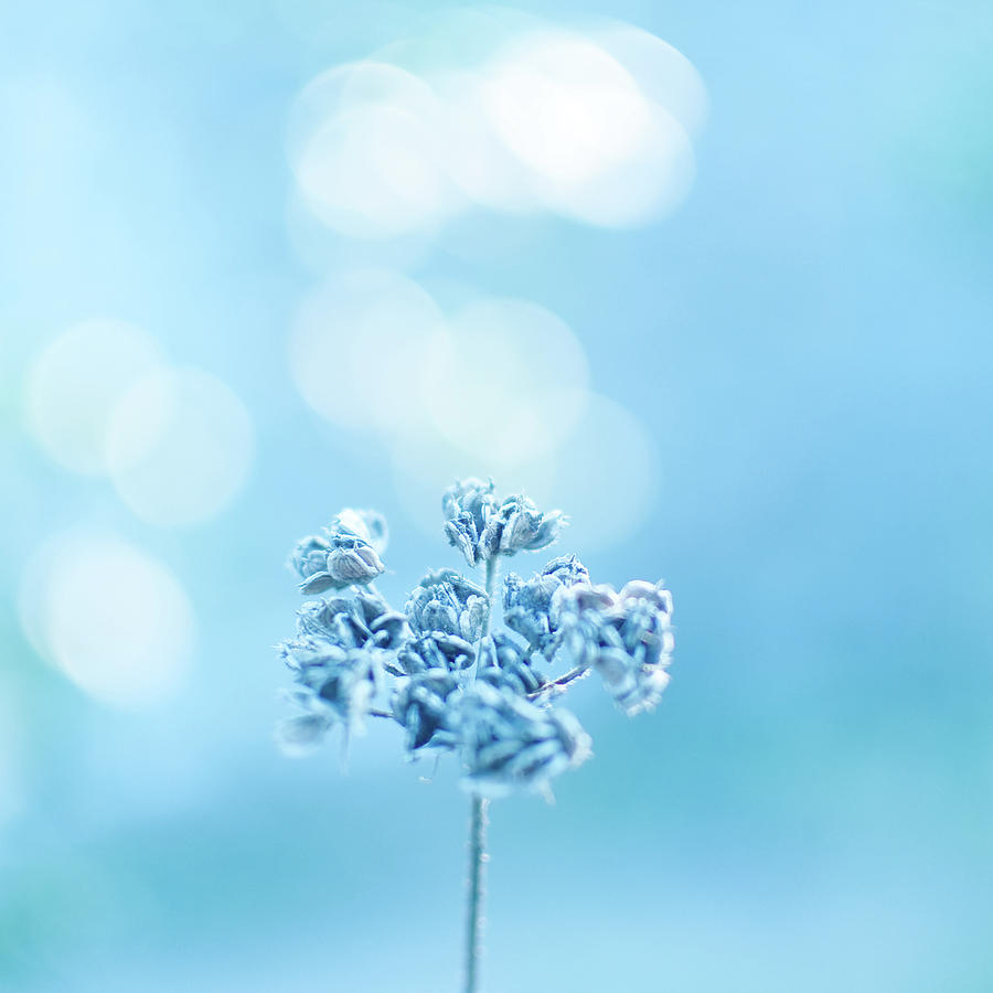 Square Photograph - September Frost by Alexandre Fundone