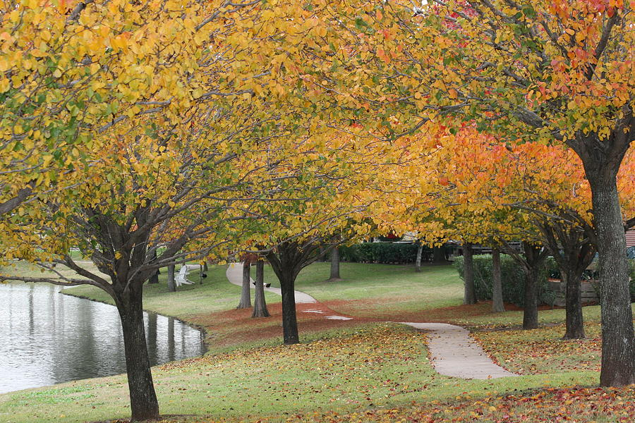 Serene Path Photograph