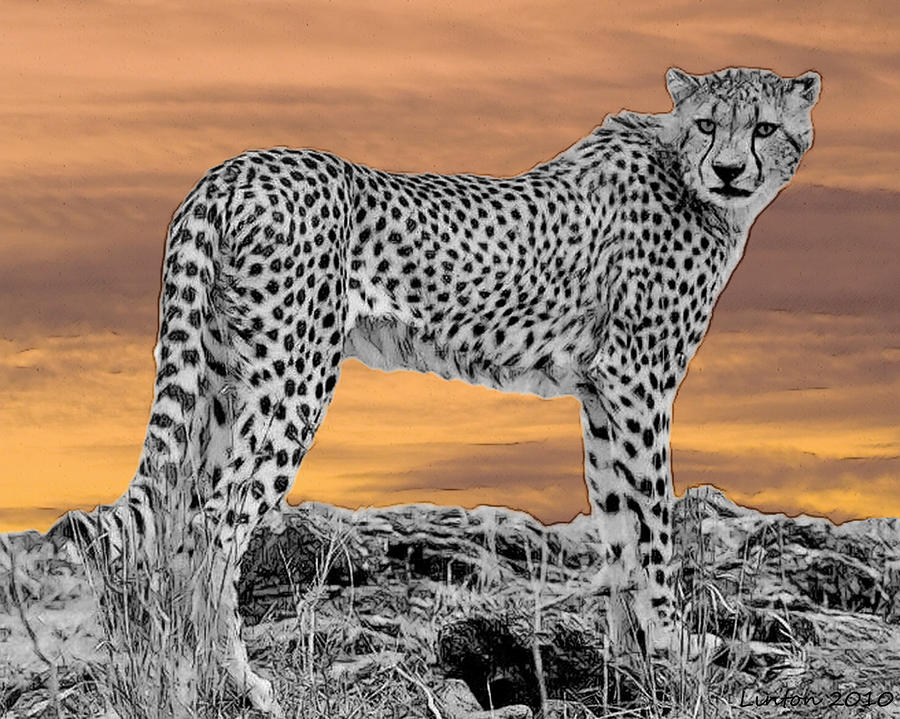Serengeti Cheetah Digital Art  - Serengeti Cheetah Fine Art Print