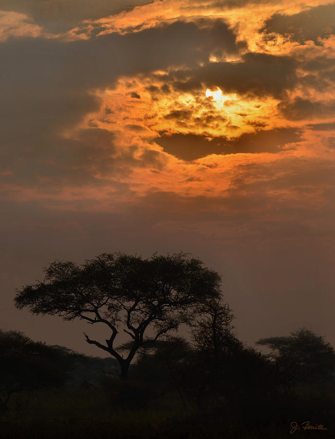 Africa Photograph - Serengeti Sun No. 1 by Joe Bonita