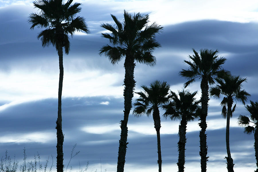 Seven Palms Photograph
