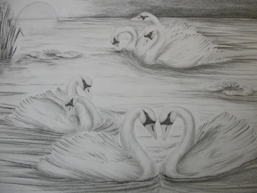 Swans Drawing - Seven Swans A Swimming by Carol Frances Arthur