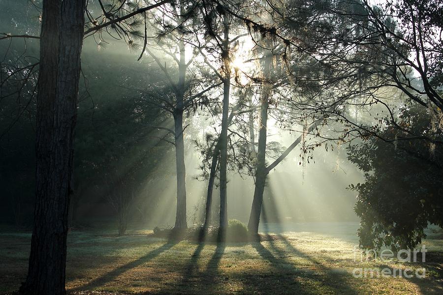 Shadows And Fog Photograph