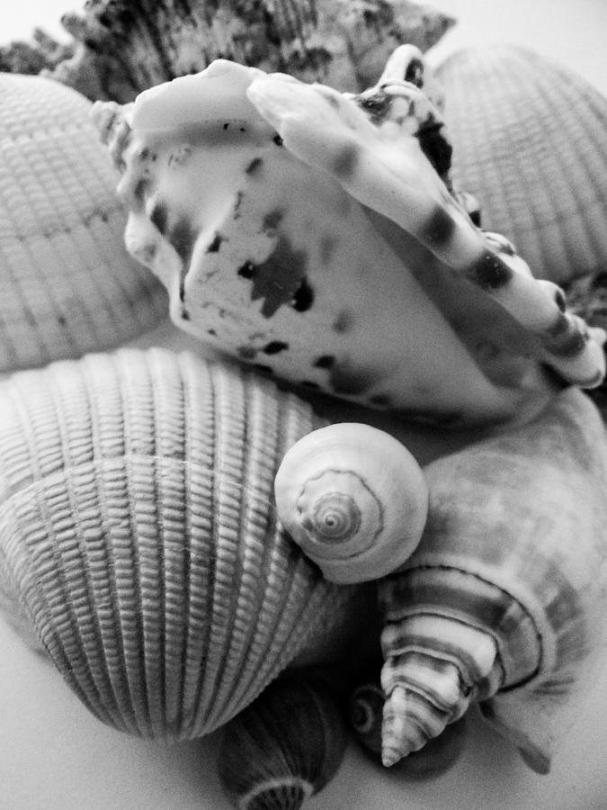 She Sells Sea Shells Photograph  - She Sells Sea Shells Fine Art Print