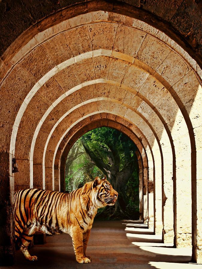 Tiger Photograph - She Waits.... by Sharon Lisa Clarke