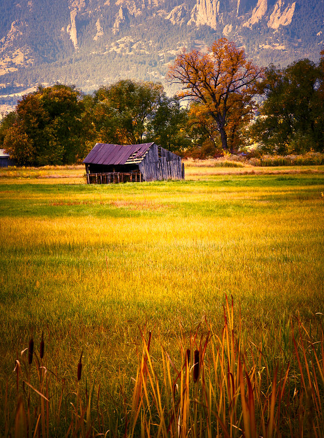 Shed In Sunlight Photograph  - Shed In Sunlight Fine Art Print