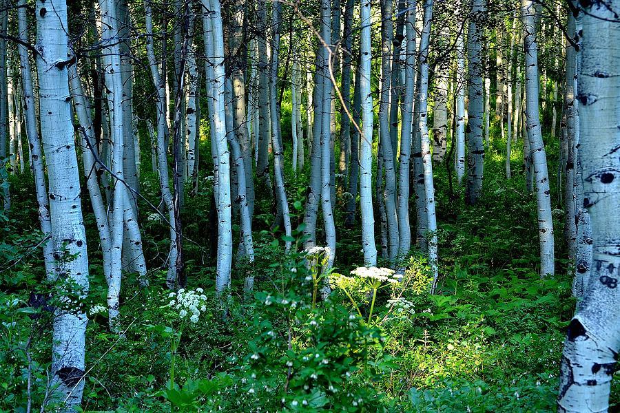 Trees Photograph - Shedding Light by Nick Pantuso
