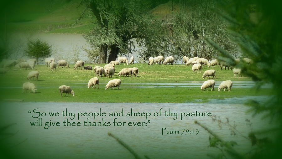 Sheep Grazing Scripture Art Photograph