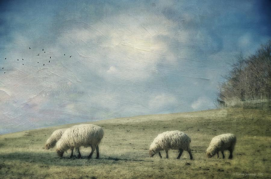 Sheep On The Hill Photograph  - Sheep On The Hill Fine Art Print