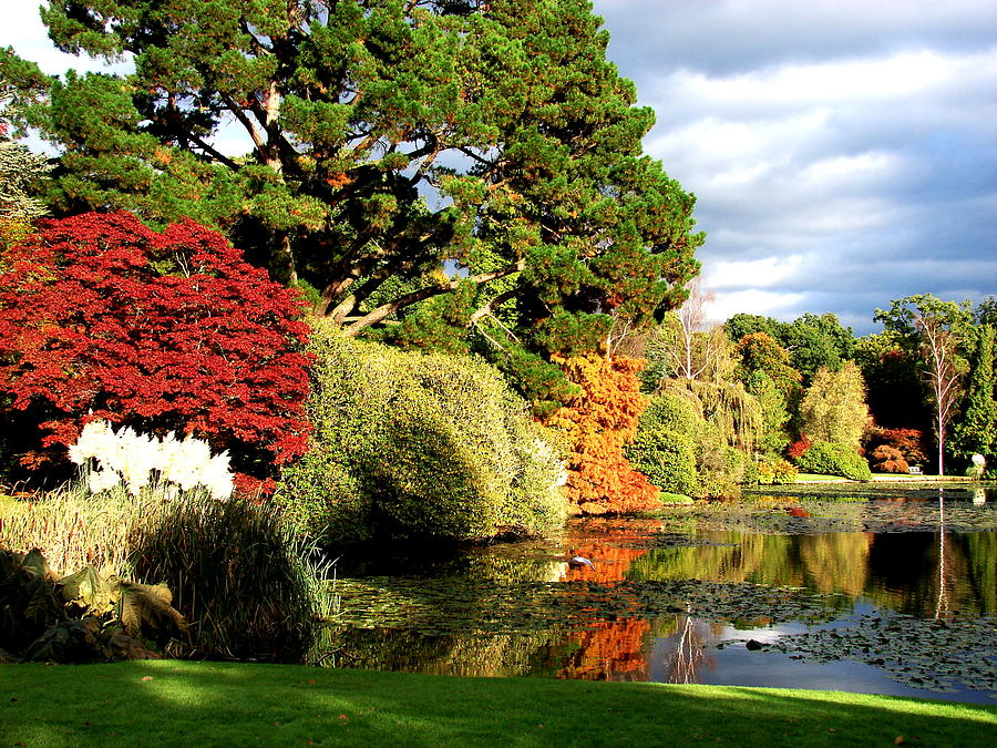 Sheffield Park Photograph