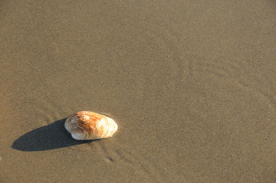 Shell And Waves Part 1 Photograph