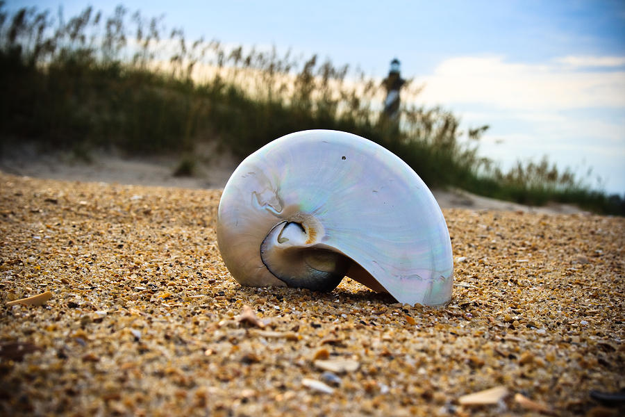 Shell Photograph