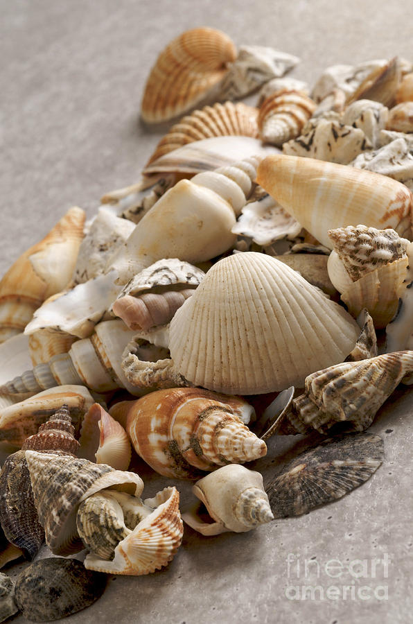 Shellfish Shells Photograph