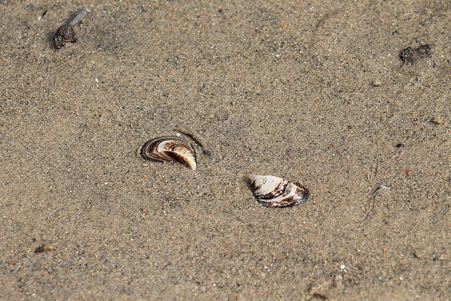 Shells On A Beach Photograph
