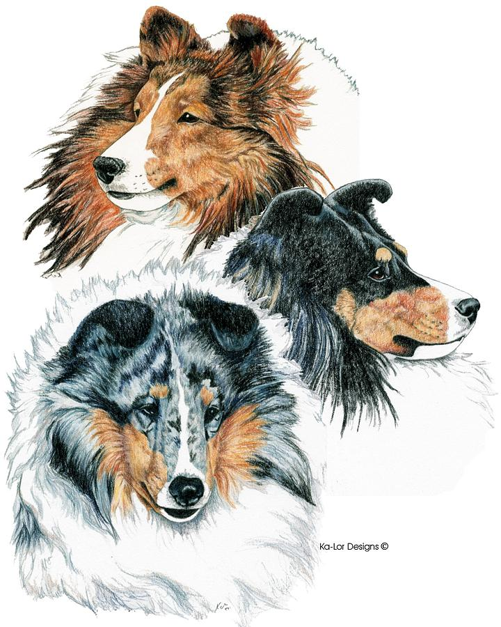 Shetland Sheepdogs Drawing