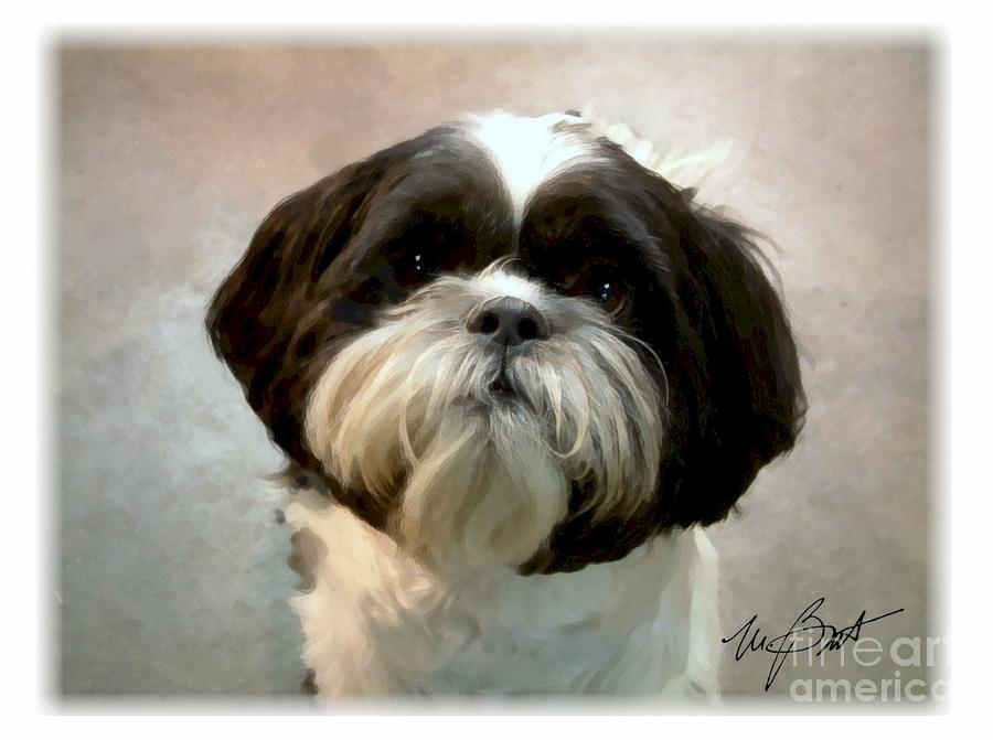 Shih Tzu Pup Digital Art