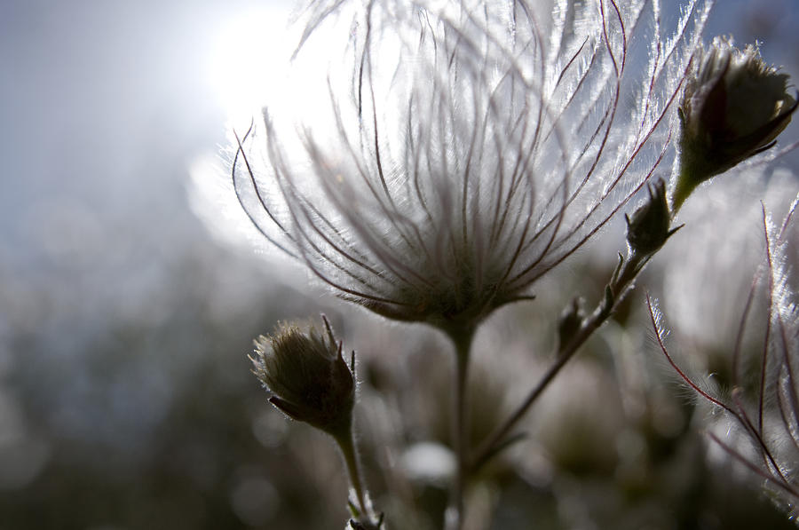 Shimmering Flower I Photograph