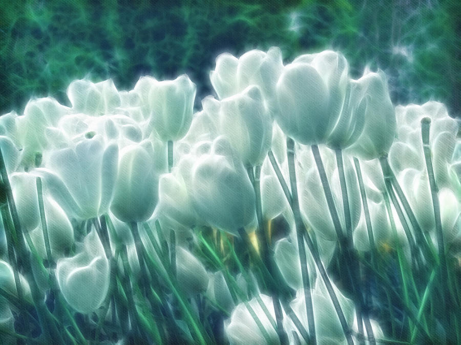 Shimmering Tulips Digital Art