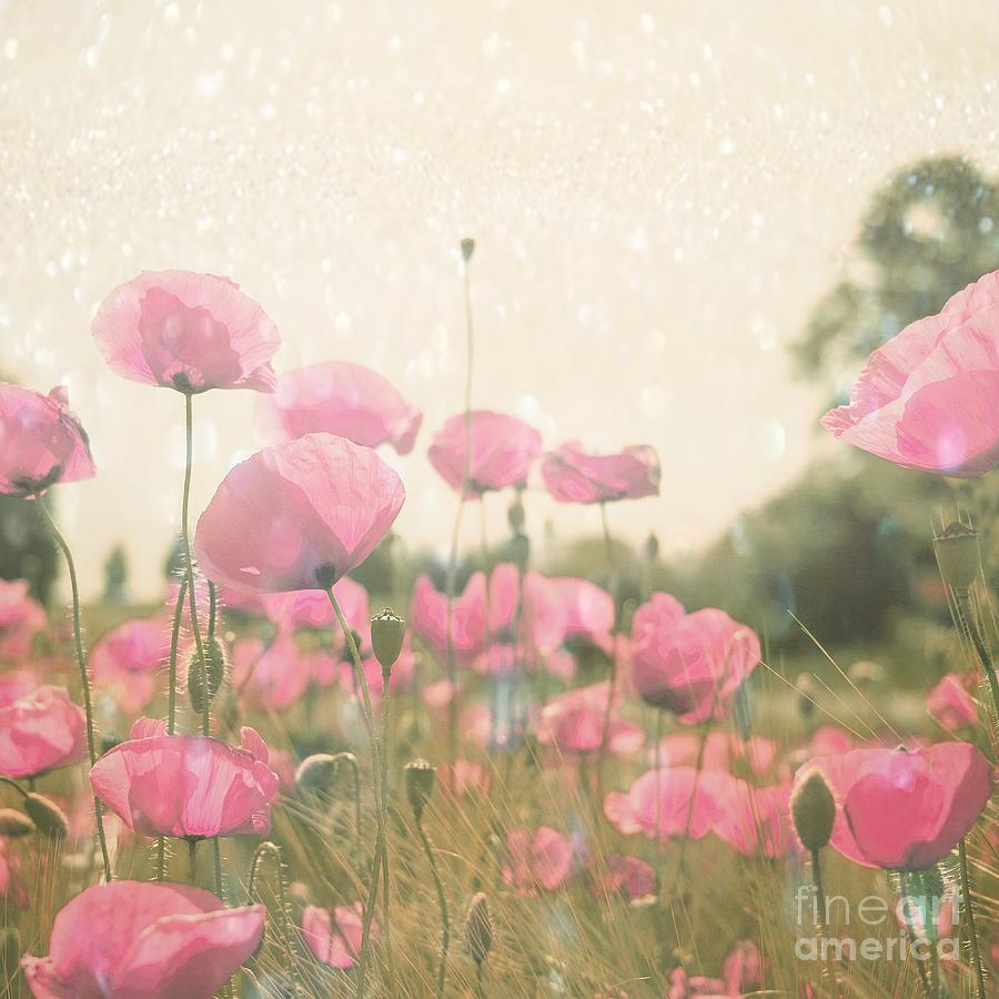 Shiny Poppies In The Summer Heat Photograph  - Shiny Poppies In The Summer Heat Fine Art Print