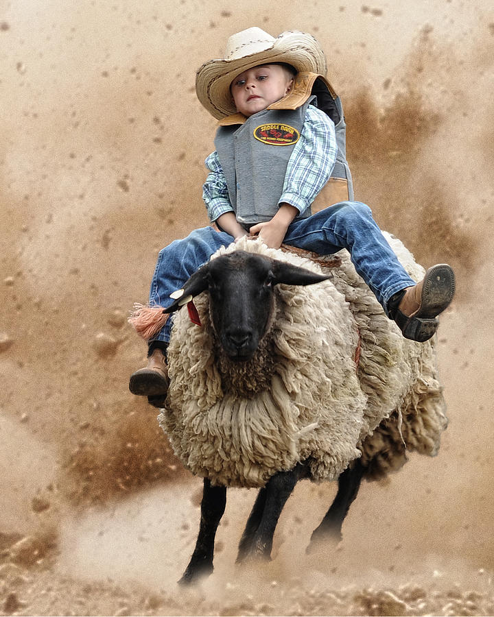 Shoot Low Sheriff Theyre Riding Sheep Photograph  - Shoot Low Sheriff Theyre Riding Sheep Fine Art Print