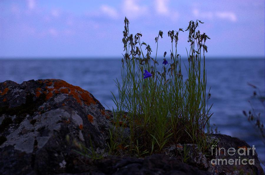 Shoreline Beauties Photograph  - Shoreline Beauties Fine Art Print