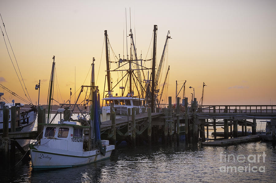 Shrimp Boats Port Royal Photograph
