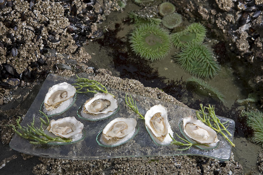 Shucked Oysters Sit On A Platter Next Photograph
