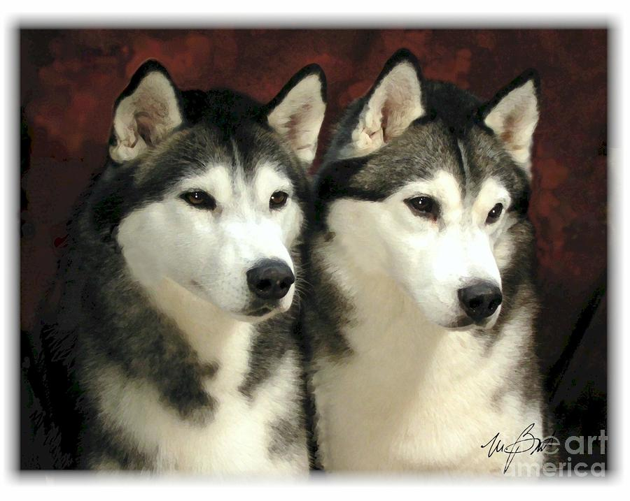 Siberian Huskies Related Digital Art  - Siberian Huskies Related Fine Art Print