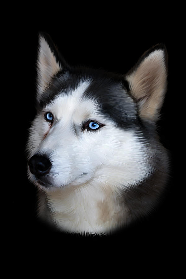 Siberian Husky Dog Digital Art  - Siberian Husky Dog Fine Art Print