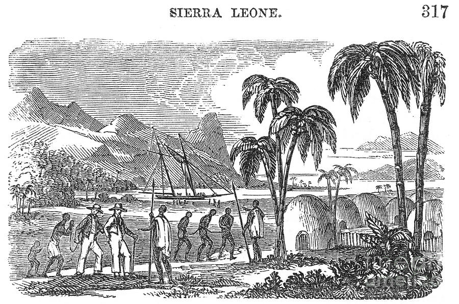 19th Century Photograph - Sierra Leone: Slave Trade by Granger