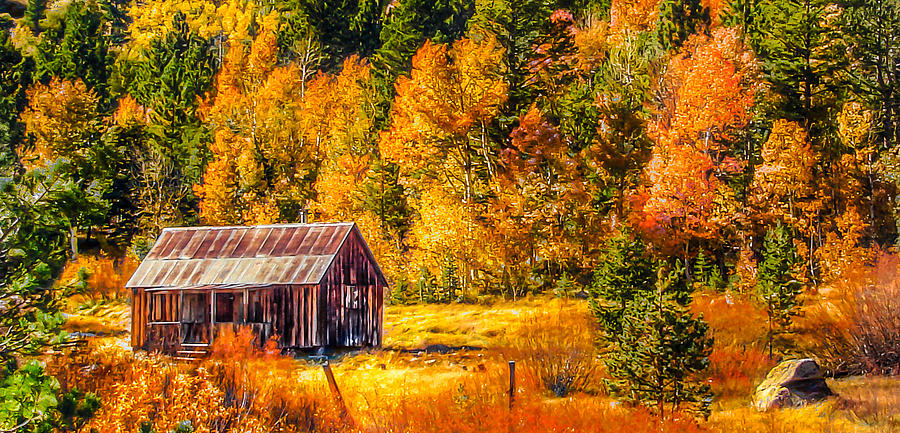 Sierra Nevada Aspen Fall Colors With Rustic Barn Painting  - Sierra Nevada Aspen Fall Colors With Rustic Barn Fine Art Print