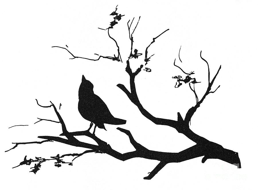 Silhouette: Bird On Branch Photograph