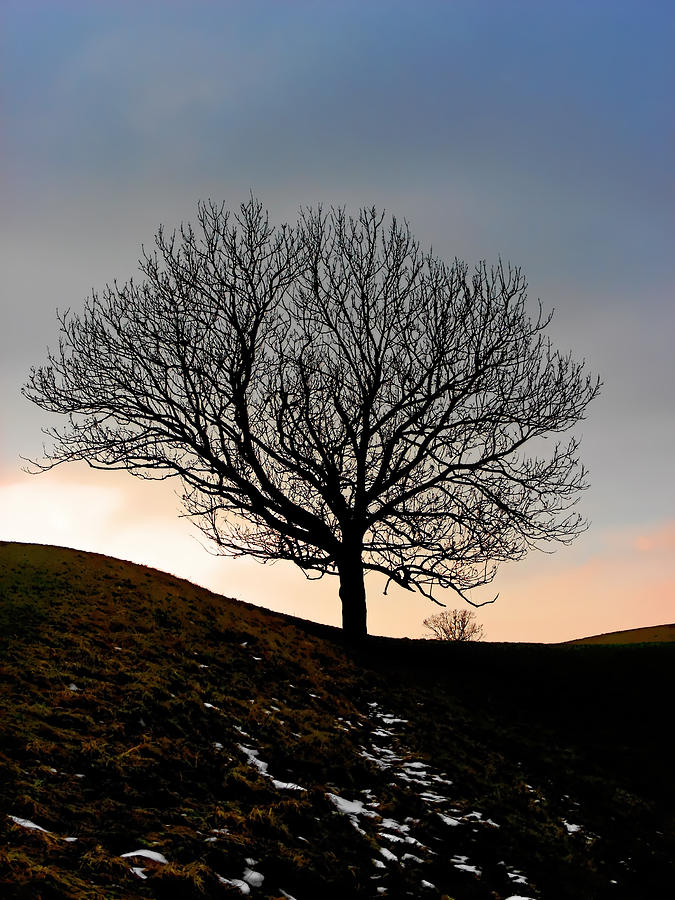 Silhouette Of A Tree On A Winter Day Photograph