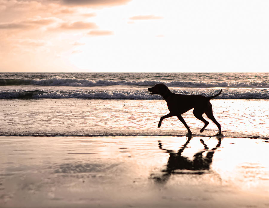 Silhouette Of Dog On Beach At Sunset Photograph  - Silhouette Of Dog On Beach At Sunset Fine Art Print